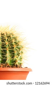 Sharp-spined cactus isolated on white