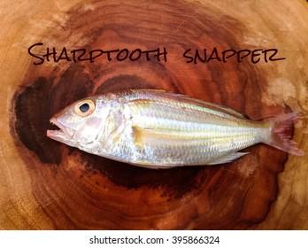 Sharptooth Images, Stock Photos & Vectors | Shutterstock