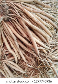 Shatavari root also known as satavar, or Asparagus racemosus, is said to promote fertility and have a range of health benefits, particularly for the female reproductive system.