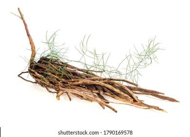 Shatavari,roots and green leaves on a white background.