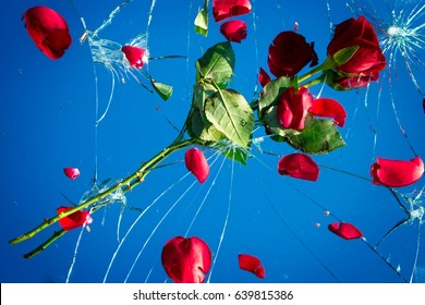 Shattered love. Red rose on a shattered broken mirror, a concept reflecting a relationship or marriage in crisis or broken.