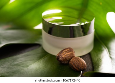 Shea Butter nuts with a jar of cream on a green leaf