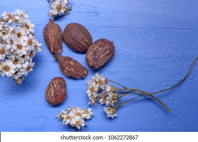Shea butter nuts on a blue background with flowers. Copy space
