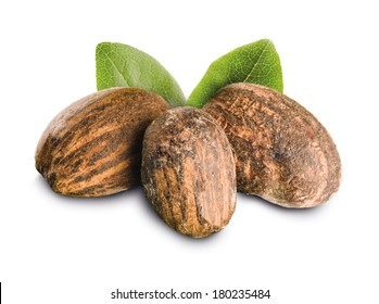 Shea Nuts isolated with leaves