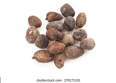 shea nuts isolated on white background, karit���¨ seeds