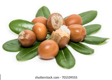 Shea nuts on leaves