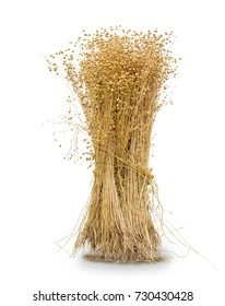 Sheaf of the harvested flax with stems, seed capsules and roots on a white background