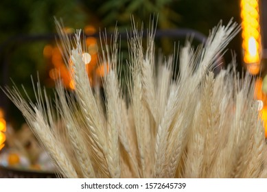 Sheaf of wheat - background with a ears of cereal for bakery product promotion, decor in rural style. Bunch of golden wheat ears on blurry lights. Selective focus.