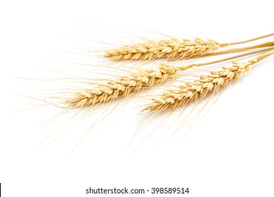 Sheaf of wheat ears isolated on white background.