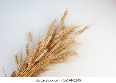 Sheaf of wheat ears on an isolated white background.