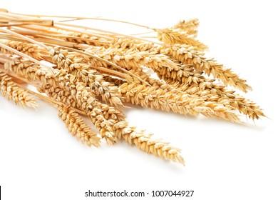 sheaf of wheat isolated on white background
