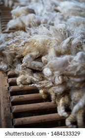 Sheared lamb wool on a table