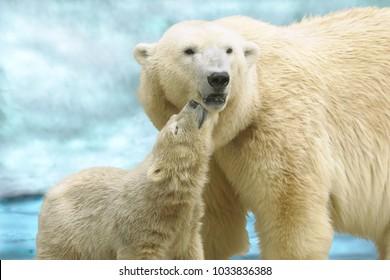 She-bear with a bear cub