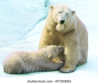 She-bear with a bear cub