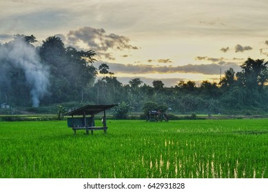 The shed in rice field in the evening.