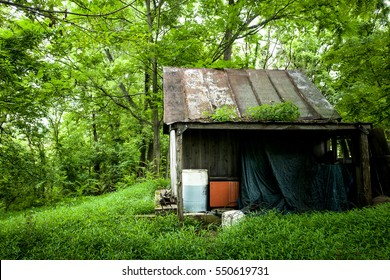 A shed under a canopy of lush green trees