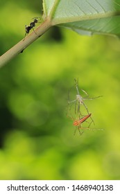 A shedded spider in midair and an ant on stem. In Zhubei,Hsinchu,Taiwan.