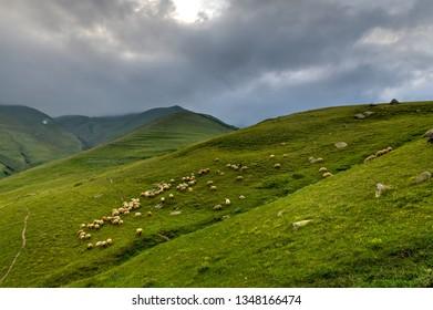 Sheep along the hills near the village of Gergeti in Georgia, under Mount Kazbegi.