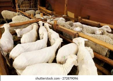 Sheep Shearing Images, Stock Photos & Vectors | Shutterstock