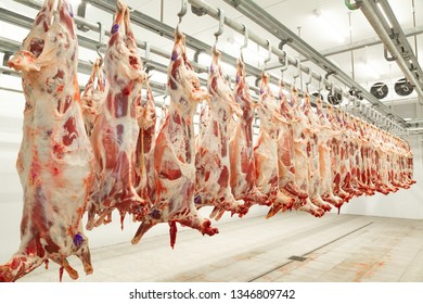 sheep carcasses in the freezer