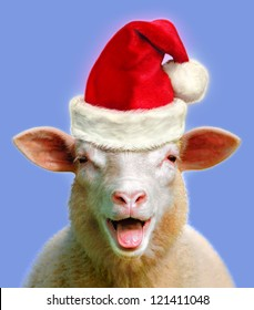 Sheep in christmas fever