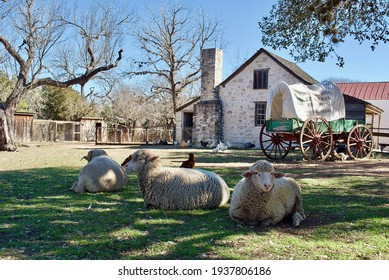 Sheep and a covered wagon at Lyndon B. Johnson State Park and Historic Site and the Sauer-Beckmann Farmstead, living history farm that presents rural Texas life as it was around 1918. - Shutterstock ID 1937806186