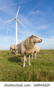 Sheep at a dike along a row of wind turbines
