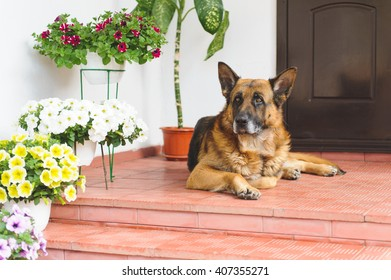 sheep dog laying on porch with flowers
