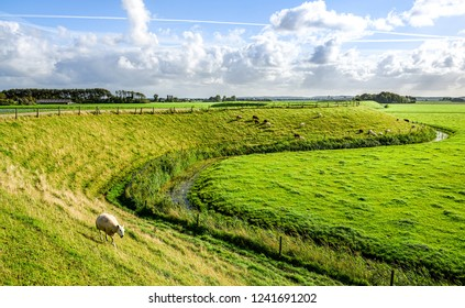 Sheep farm green field landscape. Summer green sheep farm scene. Sheep grazing stream landscape. Sheep farm view