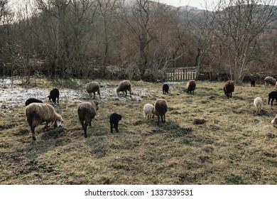 sheep farm village
