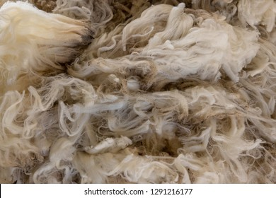 sheep fleece newly shorn