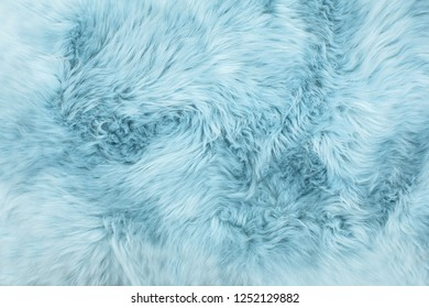 Sheep fur. Blue colored sheepskin rug background. Wool texture