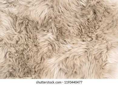 Sheep fur. Natural sheepskin rug background. Wool texture