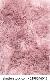 Sheep fur. Pink sheepskin rug background