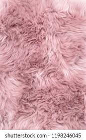 Sheep fur. Pink sheepskin rug background