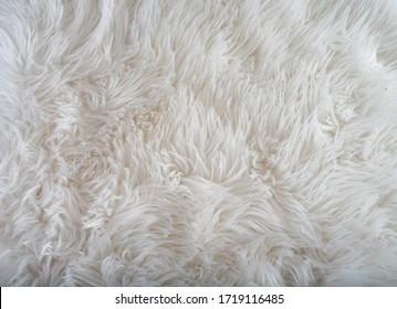 sheep fur texture, white fur texture, closeup whit fur