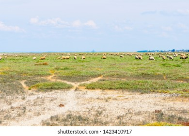 Sheep graze on the salt marshes on a hazy spring day near the village of Cherrueix, Brittaqny, France.