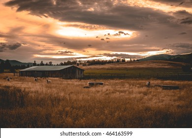 Sheep grazing in a beautiful landscape in Helena, Montana