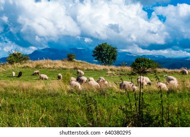 Sheep grazing in the mountain.
