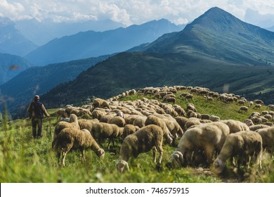Sheep herd on a green pasture in Dolomiti mountains. Sunset light, shepherd with his sheep.
