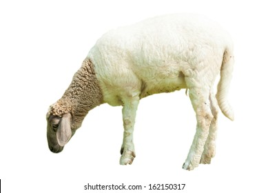 Sheep and lamp isolated on white background