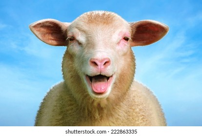 Line Drawing Of Sheep Face : Sheep head images stock photos vectors shutterstock