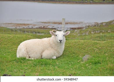 Sheep lying down in front of a loch