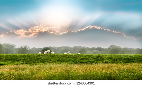 Sheep in a meadow with clouds in Deventer Overijssel