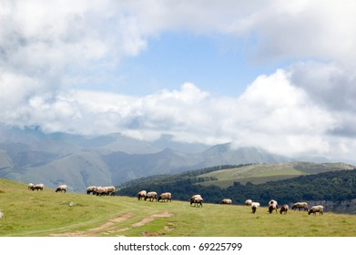 sheep in the mountains of Spain