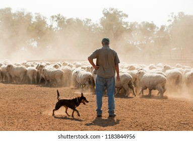 sheep mustering in outback New South Wales, Australia. - Shutterstock ID 1183844956