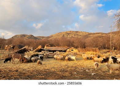 sheep on field in spring