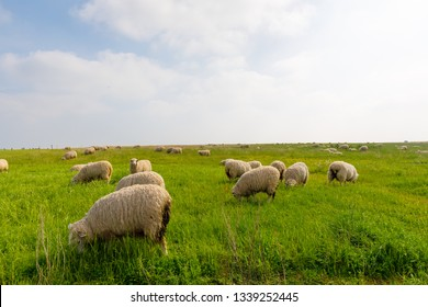 sheep on green grass field in england