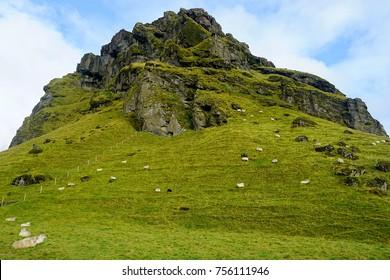 Sheep on a hill near Skógafoss