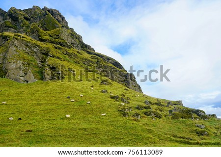 Sheep on a hill near Skógafoss